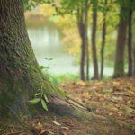 Przepiękny i {schludny zieleniec to nie lada wyzwanie, przede wszystkim jak jego konserwacją zajmujemy się sami.